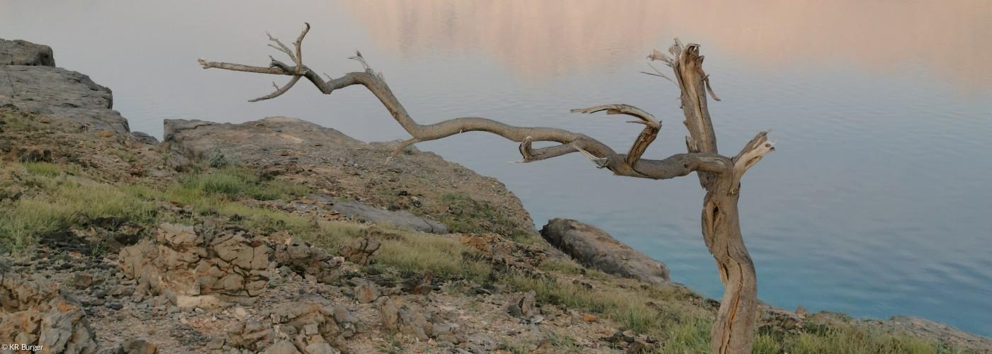 Baum auf Insel freistehend