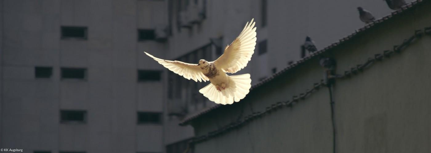 Taube fliegt durch einen Häuserblock